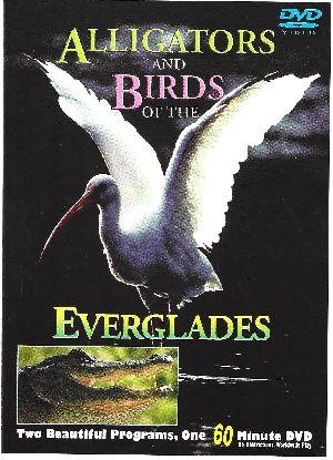 Alligatores - Birds - The Everglades