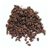 Lysergol Seeds