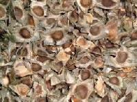 drum stick seeds