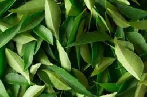 CURRY LEAF EXPORTERS