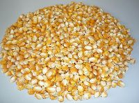 Dried Corn Kernel
