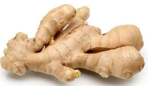 Ginger Suppliers