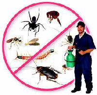 Anti Termite Treatment Services