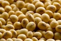 Organic Soyabean