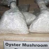 Mushroom Spawn