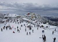 Shimla Tour Services