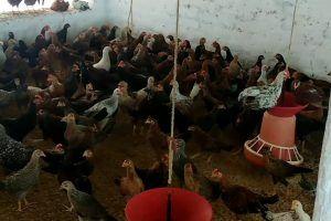 Nati Koli Farming Training Services