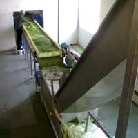 Frozen Vegetable Processing Line
