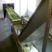Peas Processing Plant