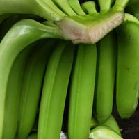 cavendhish banana