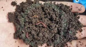 Best Vermicompost Bio Organic Fertilizer Bacteria