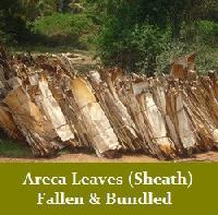 Areca Leaf