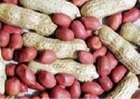 Hps Groundnuts