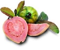 Canned Guava Pulp
