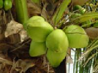 Fruit Plant Farming Services