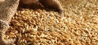 Animal Barley Feed