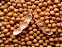 Animal Soybean Feed