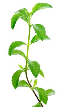 Natural Stevia Leaves