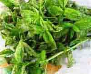 Organic Hybrid Variety Basil Leaves