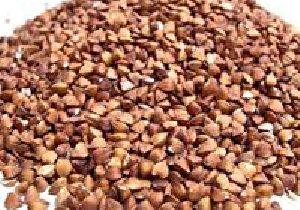 Buck Wheat Seeds