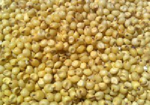 Yellow Sorghum Bird Seeds