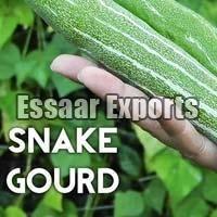 Fresh Snake Gourd