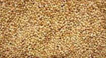 Thinai Millet Seeds