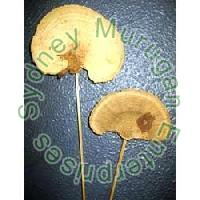 Dried Sponge Mushrooms