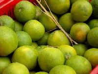 Fresh Sweet Lime
