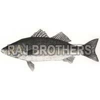 Frozen Sea Bass Fish