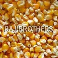 Yellow Corn Feed
