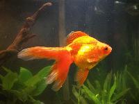 Live Ornamental Fishes