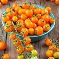 Golden Cherry Tomato