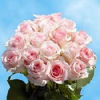 Cut Flower Roses