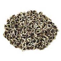 Moringa Conventional Seeds