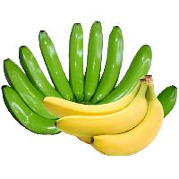 Cavendish G9 Bananas