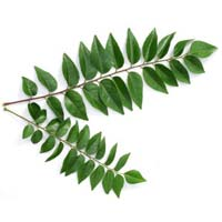 Green Curry Leaves