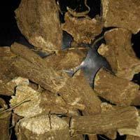 Acorus Calamus & Inula Racemosa