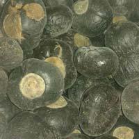 Horse chestnut & Milk Thistle Seeds