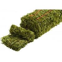 Alfalfa Hay