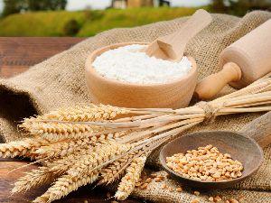 Wheat Flour/ Maida
