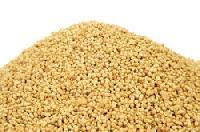 rice bran lecithin
