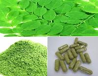 Moringa Oleifera Leaves And Powder