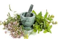 Medicinal Plant Extract
