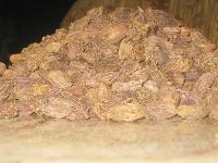 Black  Cardamom (Pure N Sure)