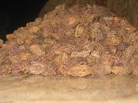 Large Cardamom