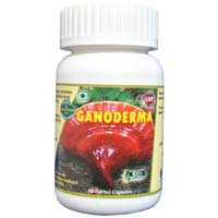 Hawaiian Ganoderma Capsule