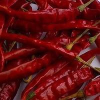 Hot Teja Chili Pepper from Guntur