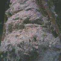 Cotton Droppings