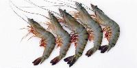Jhinga Fish